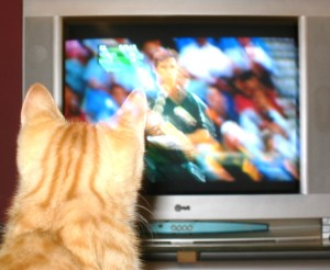 Pigeon watching cricket -- he was a fan from an early age.