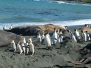 Southern Elephant Seals: Giant Slugs of the Sea? Or Just a Lot of Blubber?